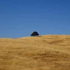 I took this photo in September near Yosemite. Winter storms may have changed this sea of gold to greener pastures.  #yosemite #norcal #oaktree #california #californialove #california_igers #bluesky #countryside #worldcaptures #roadside #roadsideamerica #californiadreaming #californialiving #lonelytree #seaofgold #travel #journey #naturephotography #bestpic #treeoflife