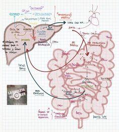 La Chuleta de Osler: Gastroenterología - Hipertensión portal y sus comp...