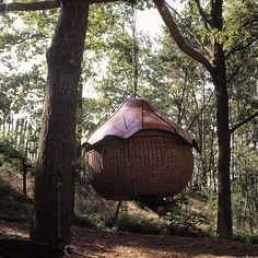 Tree House     Swinging rattan Tree house   I can't remember if it was the Ewok village, the Lost boys home in Hook or Robin Hood's Nottin...