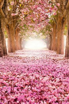 a dream forest @}-,-;--