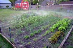 Spring Vegetable Garden 2012 Full & Growing