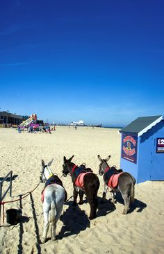 Donkey Rides at Great Yarmouth, Norfolk