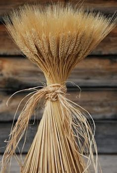 a Scandinavian traditon...at Christmas.wheat bundle's..for decoration..and welcome to guest's..