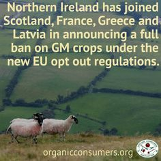 """Environment Minister of Northern Ireland, Mark H Durkan announced, """"I remain unconvinced of the advantages of GM crops, and I consider it prudent to prohibit their cultivation here for the foreseeable future."""" #GMOs #Ag #Food"""