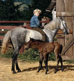 That horse is gorgeous!!