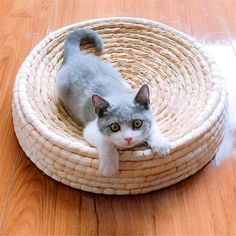 Large bowl shape cat scratch board big cat nest wear-resistant   Etsy Puppy Kennel, Grand Bol, Cat Toilet, Boite A Lunch, Bed Mats, Small Cat, Cat Sleeping, Cat Scratching, Buy A Cat