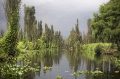 Mexico's Xochimilco floating gardens    The floating gardens, which date back to the time of the Aztecs, now show worrying signs that their ecosystem is crashing