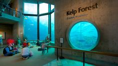 The Kelp Forest Exhibit...where it all started.