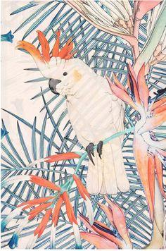 Home - Forget Me Not prints, Pattern design studio Vogel Illustration, Art And Illustration, Vector Illustrations, Whatsapp Wallpaper, Design Textile, Fabric Design, Estilo Tropical, Desenho Tattoo, Tropical Birds