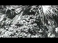 Charles Darwin - Profili di protagonisti 1 - rai storia - YouTube