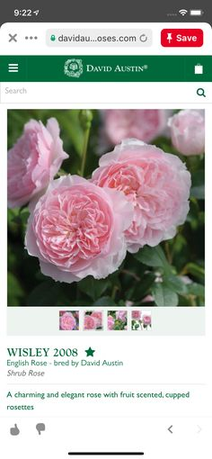 Shrub Roses, David Austin, English Roses, Rosettes, Shrubs, Flowers, Plants, Shrub, Plant