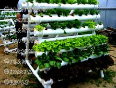 Create a Garden with No Soil, and Little Work Hydroponics System, Hydroponic Gardening, Aquaponics, Organic Gardening, Backyard Coop, Chickens Backyard, Succulent Bouquet, Succulent Terrarium, Container Gardening Vegetables