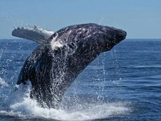 Wildlife safari and whale watching in South Africa www.ontracksafaris.co.uk