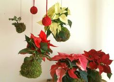 Poinsettias with a Christmas theme add charm to an arrangement.