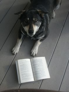 Dixie Jane, Reading her favorite book Wishbone Dog Days of the West, By Vivian Sathre