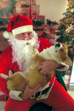 378 Best SANTA PAWS Images Animals Christmas Animals Pets