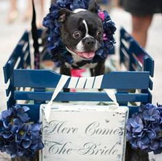 Look how cute this dog flower girl is in a wagon!