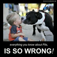 Pit Bull Terriers. The kindest, loving, and loyal breed you could ever ask for.