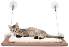 - Is your cat always searching for a view outside or a warm place in the sun? The search is over with this Window Cat Bed. Say goodbye to bulky cat condos and other beds your cat won't use and say hel