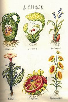 CODEX SERAPHINIANUS.  In the late 70s italian architect, illustrator and industrial designer luigi serafini made a book, an encyclopedia of unknown, parallel world. It's about 360-380 pages and it's written in an unknown language, using an unknown alphabet.