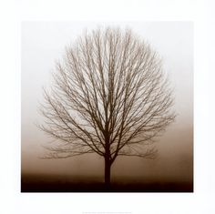 There's something about a bare tree that's haunting, yet beautiful...