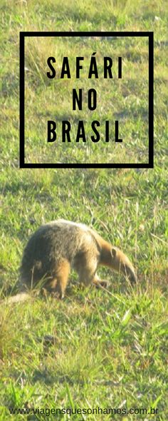 Conhecemos a rica fauna brasileira no melhor passeio do Pantanal, o Safári Fotográfico com Focagem Noturna