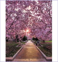 I'd love to walk thru this every morning/evening.