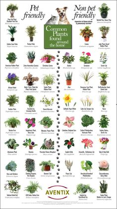 Pet-friendly plants