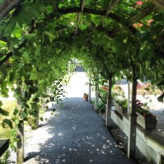 Knapp Winery (Finger Lakes) - one of my favorite wineries in upstate NY.