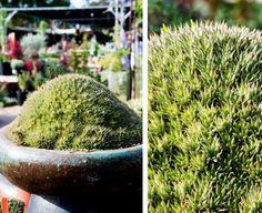 HappyModern.RU | Суккуленты (50 фото): чудные растения,  привыкшие к засухе | http://happymodern.ru