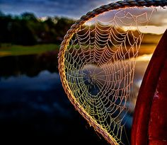 While shooting the sunrise on the pond, I noticed this dew laden web the rising sun had turned to spun gold.