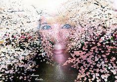 Me adentro em cerejeiras flor