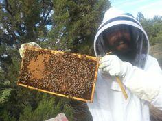 #beekeeping #bendoregon #bees