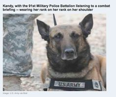 Military dogs are amazing and hard working.