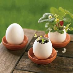 cute strawberry plant Egg Shell Planters, Planter Pots, Planter Ideas, Container Gardening, Gardening Tips, Balcony Gardening, Egg Shells In Garden, Petunia Plant, Deco Nature