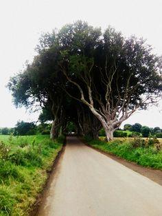 Game of thrones trees. Ireland. Path to wonderland. Utopia.