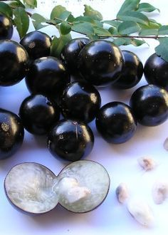 Black Ball Candy - used to buy them for pennies and watch our mouths turn black! Balcony Garden, Indoor Garden, Garden Plants, Weird Trees, Fruit Photography, Succulent Wall, Exotic Fruit, Fruit And Veg, Green Life