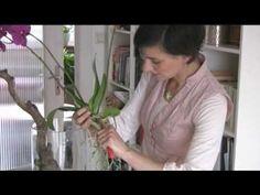 Orchideen - Raus aus dem Topf und ab auf den Ast - YouTube