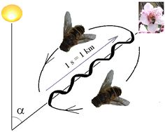 Bee - Wikipedia, the free encyclopedia