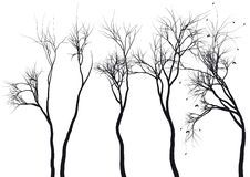 Tree silhouettes,  Royalty Free Stock Image