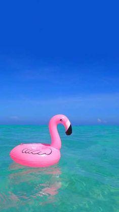 phonewallpaper pink iphone wallpaper sunset Flamingos in the sea Iphone Wallpaper Water, Flamingo Wallpaper, Summer Wallpaper, Cute Wallpaper For Phone, Cute Wallpaper Backgrounds, Trendy Wallpaper, Pink Wallpaper, Aesthetic Iphone Wallpaper, Mobile Wallpaper
