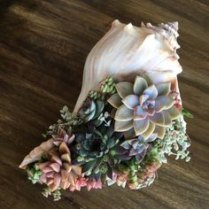 Pink Conch Shell Succulent Arrangement - Colorful!