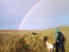 Dog walks: Bull Island double rainbow | A dog's paw Dog Paws, Dog Walking, Walks, Your Dog, Rainbow, Island, Dogs, Nature, Travel