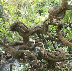 Tamarindus Indica, Bonsai Styles, Bonsai Plants, Color Palettes, Experiment, Greenery, Trees, Japan, Friends