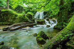 New free stock photo of wood landscape nature via Pexels https://www.pexels.com/photo/cascade-creek-environment-fern-460621/