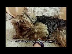 TRECE (Cortometraje) - YouTube