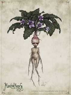 Mandrake is a mythical plant (or not so mythical because you can really obtain it in some shops) whose cries can make you die (according to Harry Potter) or heal some internal wounds etc. Art And Illustration, Animal Illustrations, Illustrations Posters, Fantasy Kunst, Fantasy Art, Mythological Creatures, Fairy Land, Magical Creatures, Botanical Art