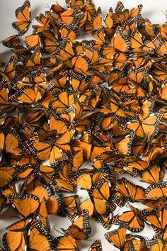 Paper Butterflies.