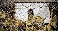 Petition · Wilderness Trail Zoo In Birch Run: Expand or shut them down! · Change.org