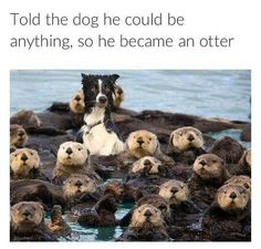 Look at the otters!!!!